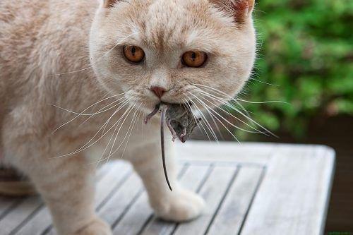 Кошки - лучшее средство