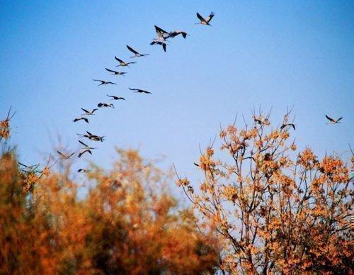 Отлет птиц