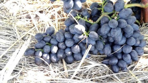 Размер грозди