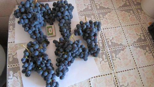 Размеры гроздей