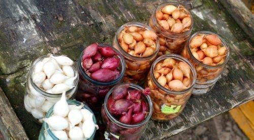 Лук севок разных сортов