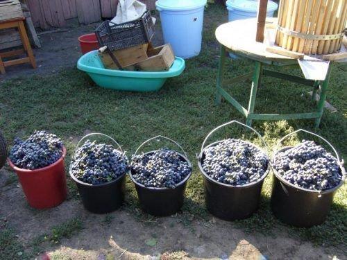 Подготовка к изготовлению вина
