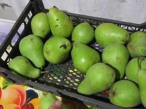 Дозаривание плодов