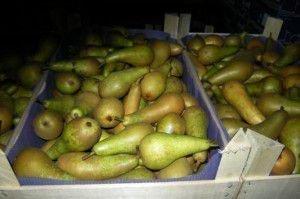 Хранение плодов груши