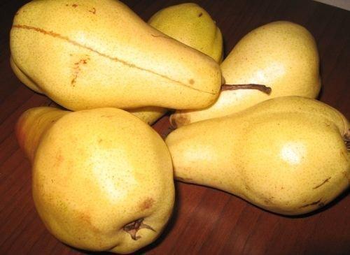 Коричневая полоса на плодах