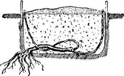 Схема размножения катавлаком