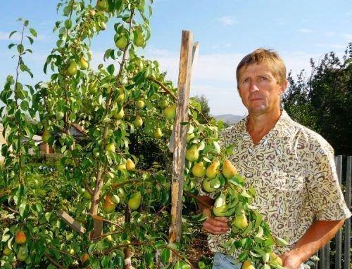 Урожайность Чижовской