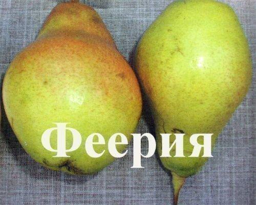 Плоды сорта Феерия