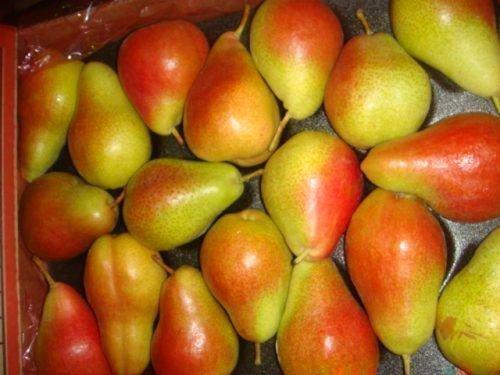 Плоды сорта Форель