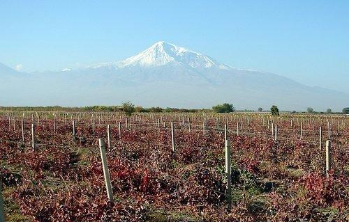 Погибший виноградник