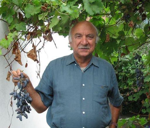Урожай на Кубани