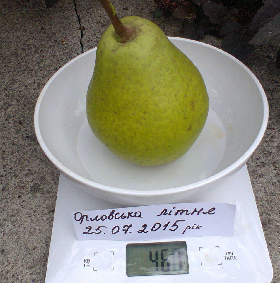 Вес плода Орловской летней