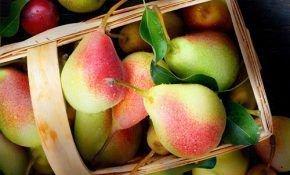 О популярных сладких сортах груш