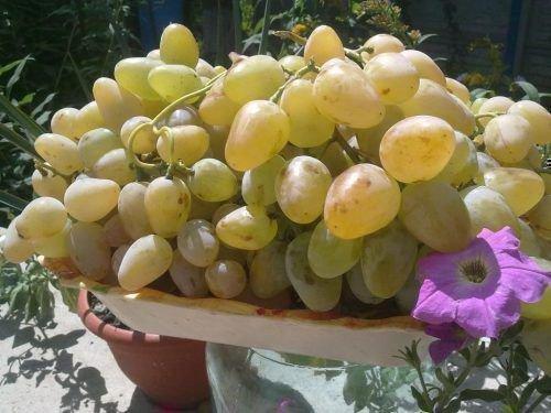 Крупная гроздь Лорда