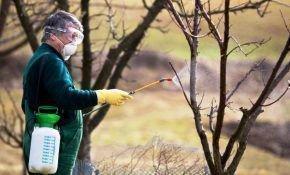 Какие существуют разновидности болезней и вредителей груши