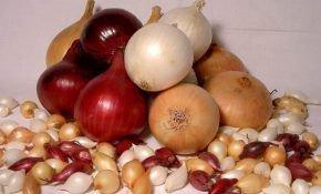 Как выращивают севок лук - особенности ухода