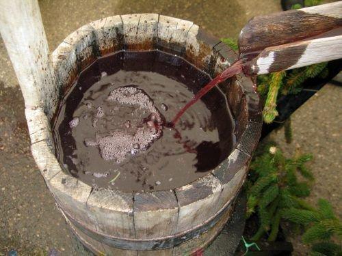 Левокумский - очень сочный сорт винограда