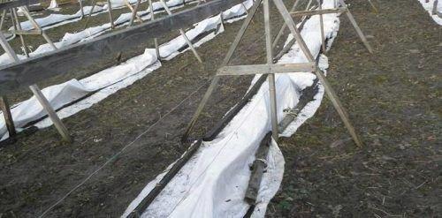 Укрытие винограда Левокумский на зиму
