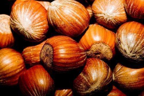 Орешки фундука