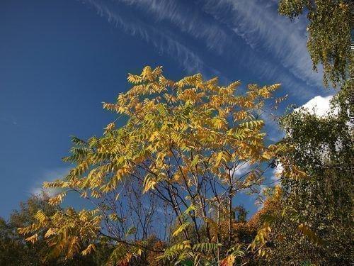 Осенний орех