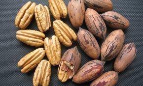 Разных виды орехов и сферы их применения