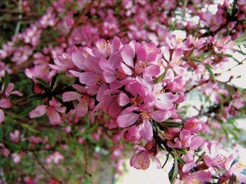 Розовая пена
