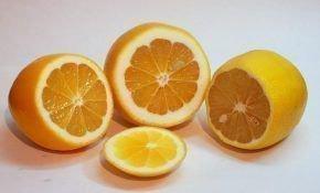 Лимон Ташкентский