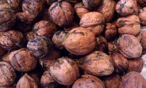 Сроки созревания грецкого ореха