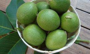 Что из себя представляет зеленый грецкий орех?