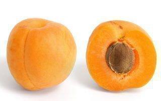 Выращиваем абрикосовые деревья из косточек дома