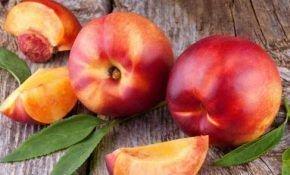 Особенности выращивания гибрида персика и абрикоса