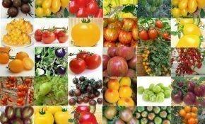 Семена томатов от В. Д. Попенко на 2020 год
