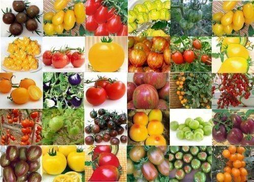 Коллекция томатов - фото