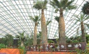 Особенности выращивания слоновой пальмы