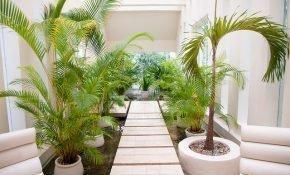 Выращивание комнатной пальмы