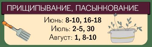 Даты ухода томатов