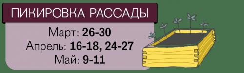 Даты пикировки томатов