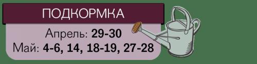 Даты подкормки томатов
