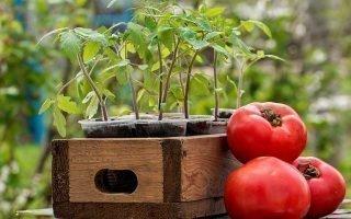Лунный календарь для выращивания помидоров на 2020 год