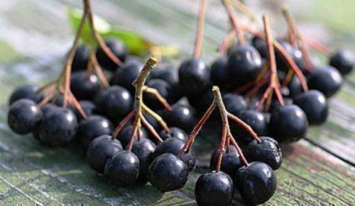 Плоды. Черноплодная рябина