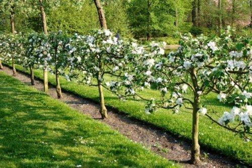 Сад-пальмета