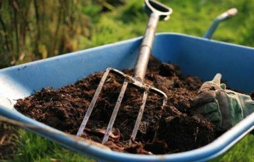 Чернокорка, органические удобрения