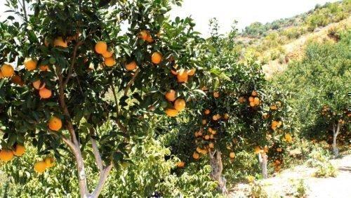 Сады на Сицилии