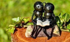 Как избавиться от муравьев на садовой вишне