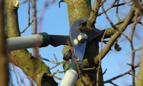 Как проводить обрезку вишни