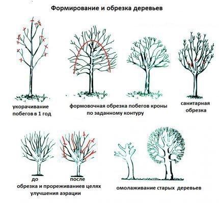 Обрезка деревьев рябины