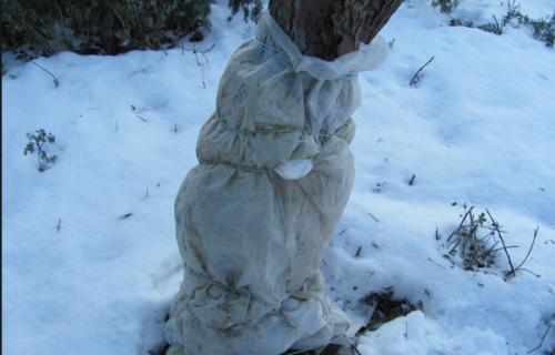 Защита зимой