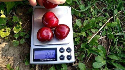 Вес плодов