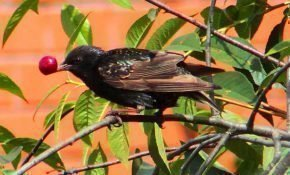 Методы защиты черешни от птиц
