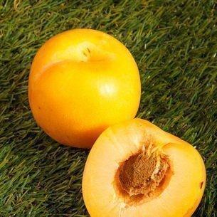 Плоды сливы Мирабель
